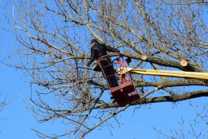 10-questions-to-ask-when-hiring-a-tree-care-service_inexpensive-tree-care-768×512
