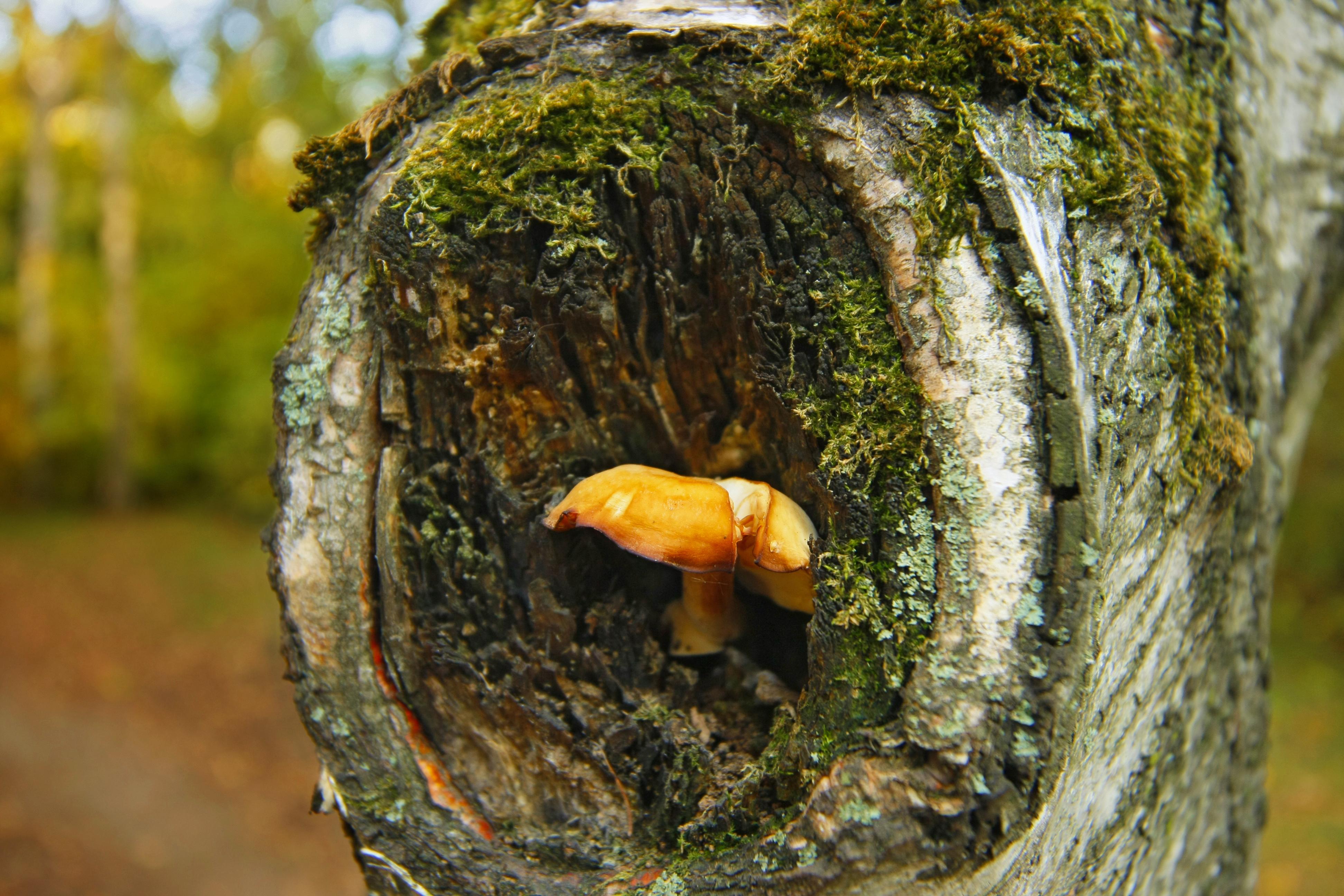 mushroom in a hollow