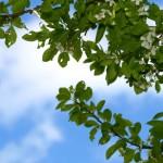 How-Pruning-Keeps-Trees-Healthy