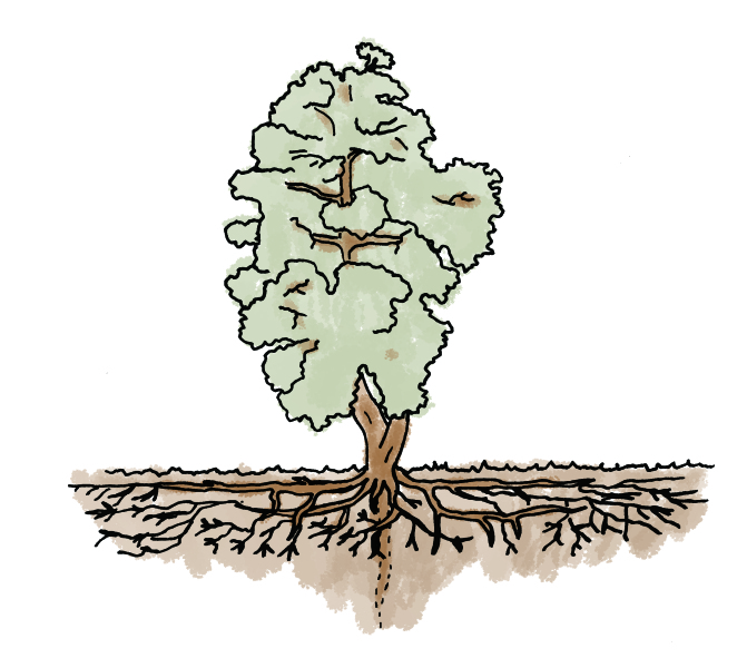 tree-and-root-system