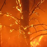 Prune Trees to Reduce Fire Risk