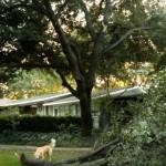 Sudden Branch Drop