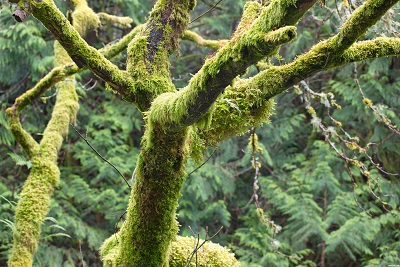 Green moss on trees