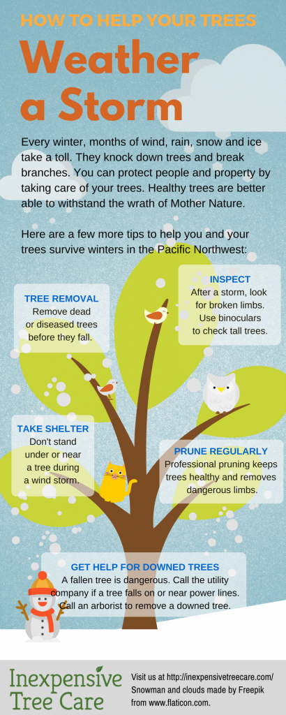 Help Trees Weather a Storm