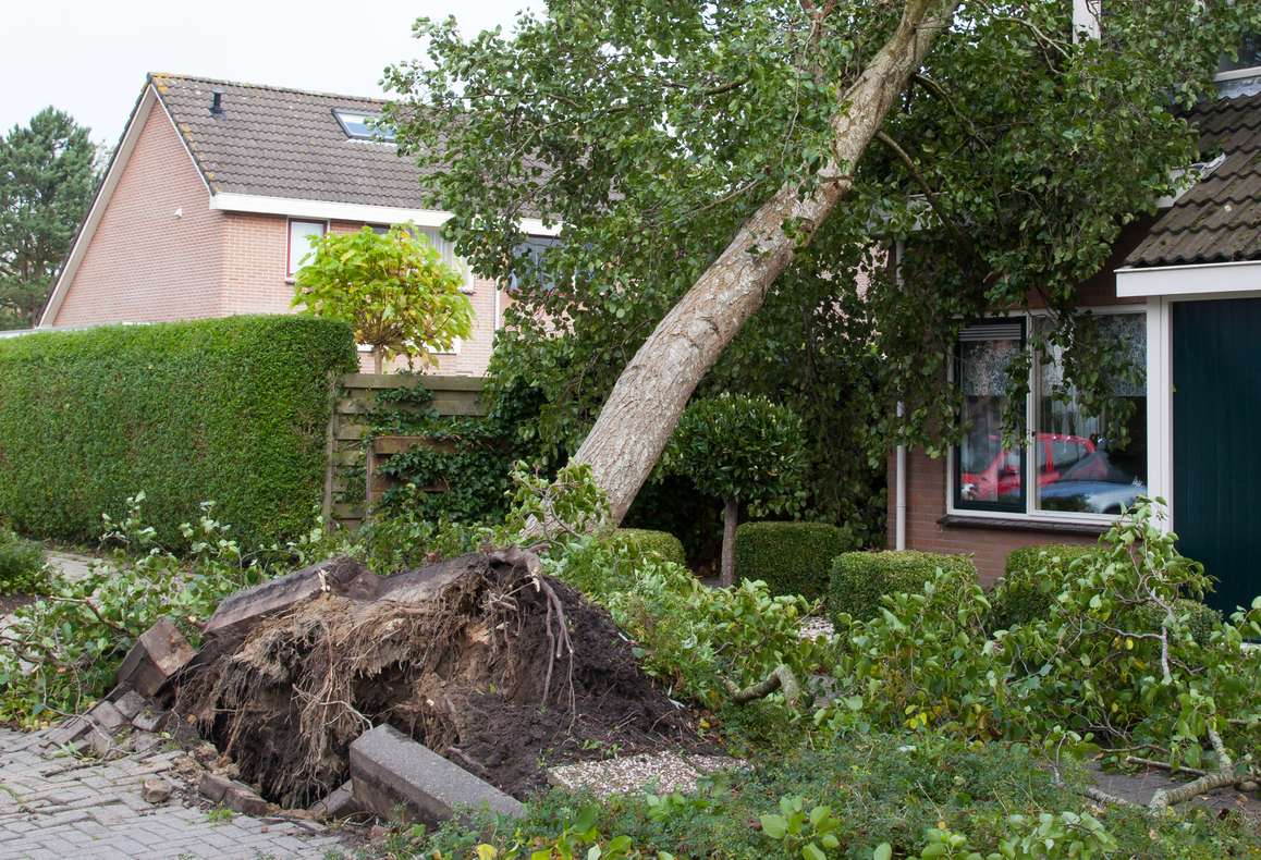 What-to-Do-if-a-Tree-Falls-on-Your-House