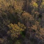 aerial-trees