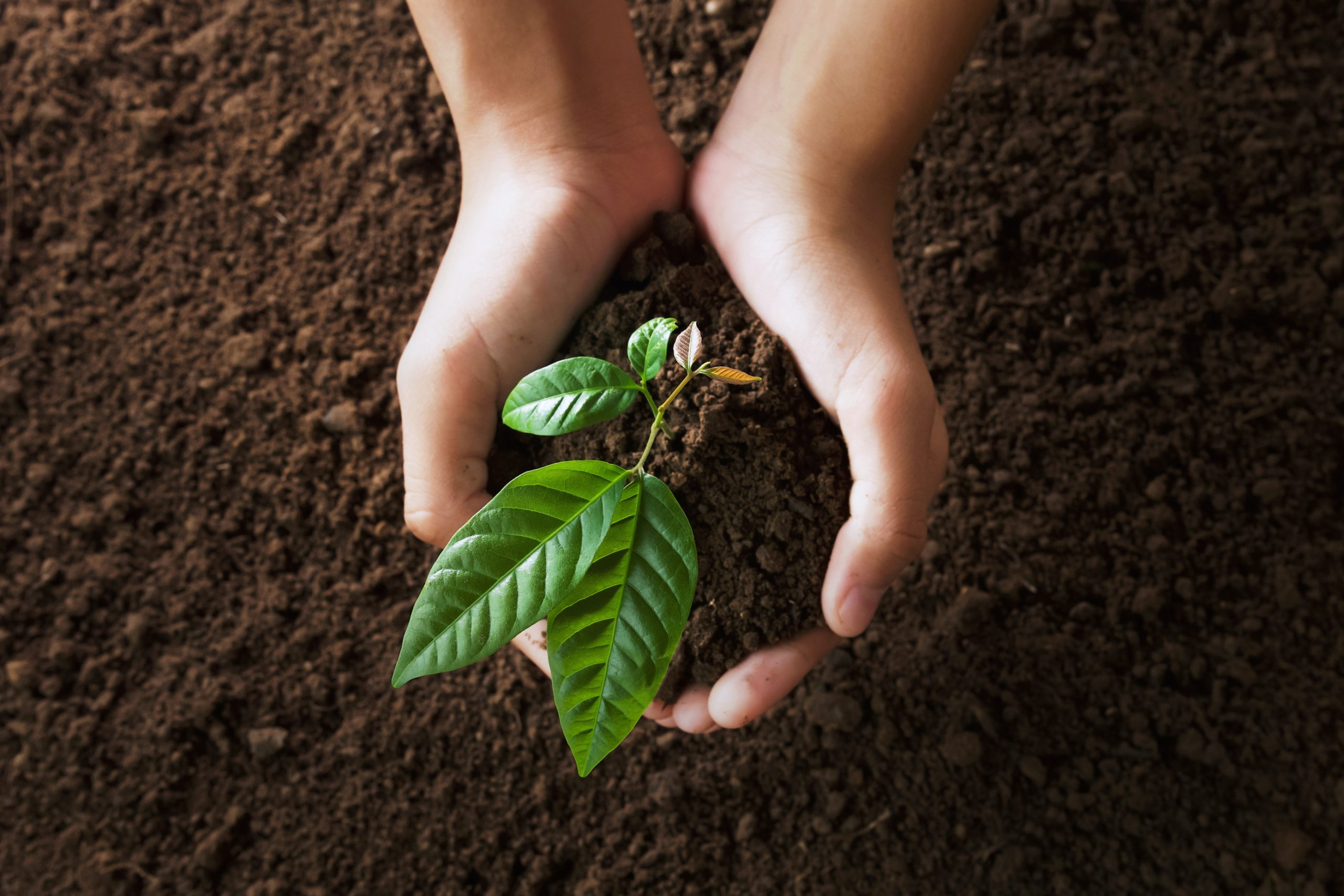 Top view hand holding young tree on soil background for planting to illustrate Arbor Day Tree Care Tips And Techniques