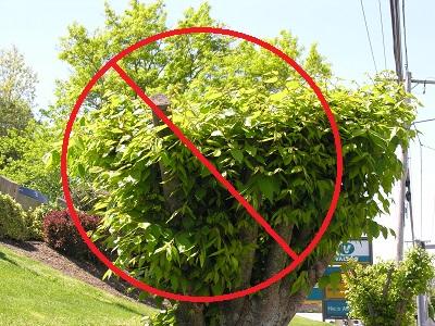 bad pruning