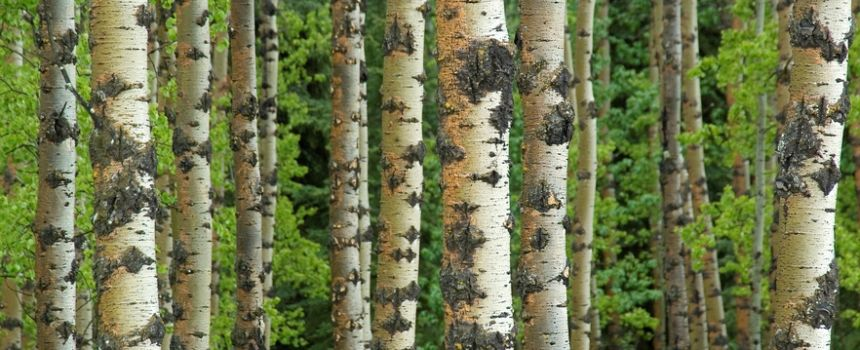 Appraisal process: How do we determine prices for tree services?
