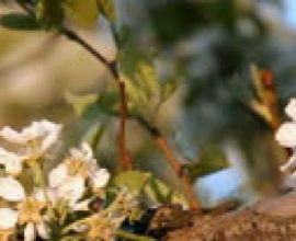 How To Prepare Your Trees for Spring
