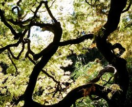 Caring for Trees During a Drought