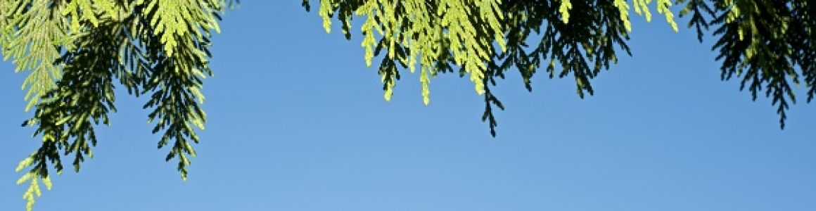 Climate Change & Its Effect on Western Red Cedar