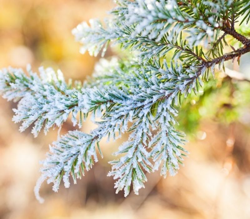 How a Late Spring Freeze Can Affect Your Trees
