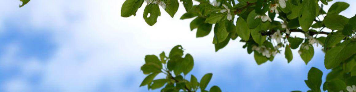 How Pruning Keeps Trees Healthy