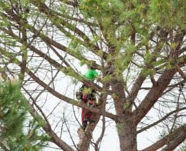 Tree Pruning Guide by Season