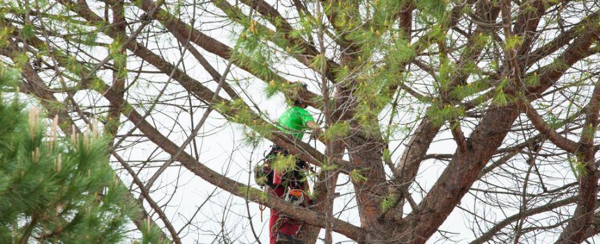 Tree Pruning Guide by Season
