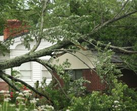 Who is responsible for fallen tree removal?