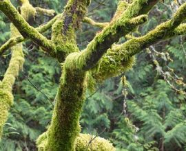 How To Naturally Remove Moss From Trees