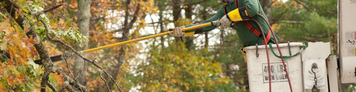 6 Benefits of Tree Trimming