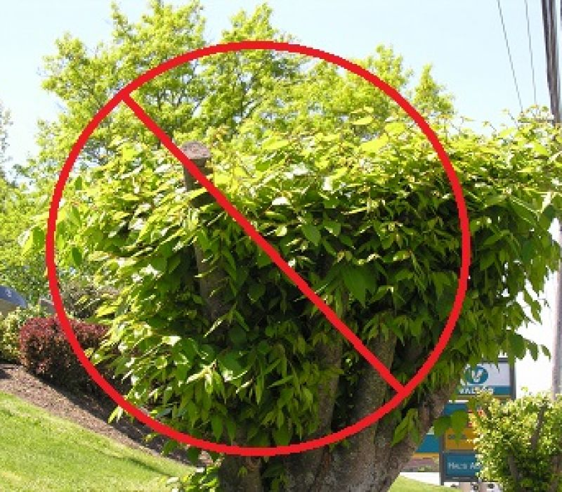 5 Pruning Mistakes To Avoid