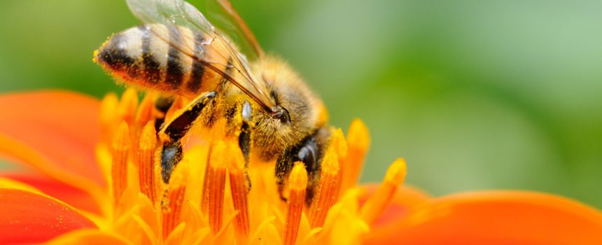 Cultivate a Bee-Friendly Landscape