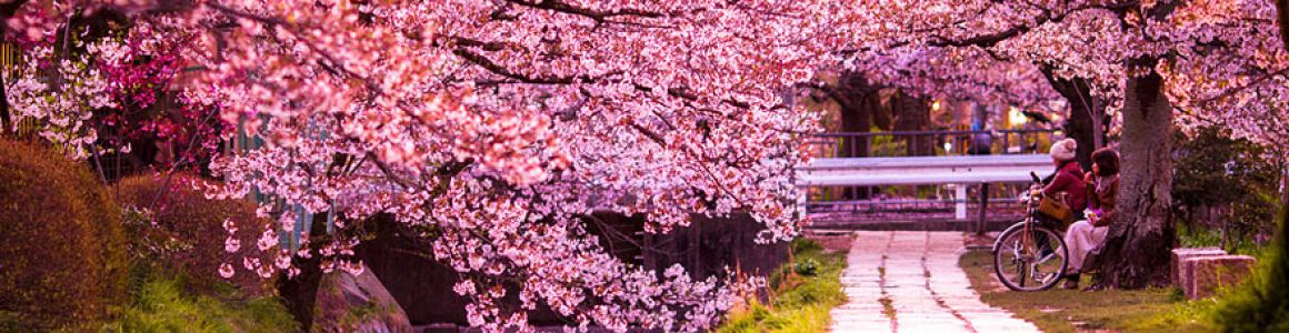 Spring-Flowering Trees To Watch For In Portland