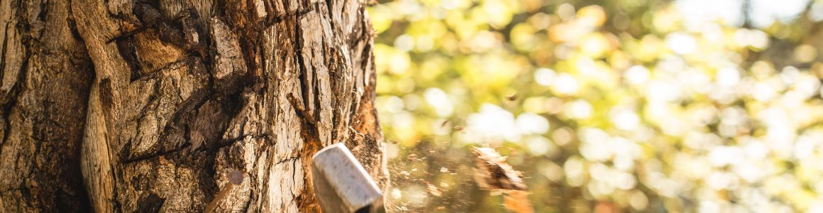 Why Tree Removal is Too Dangerous to DIY