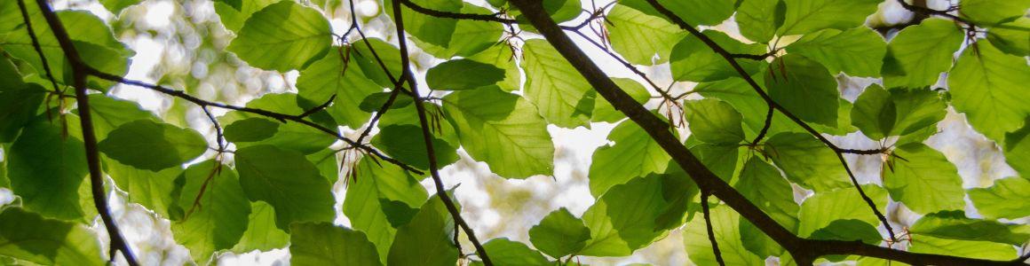 Four Common Tree Diseases