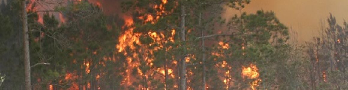 The Northwest's 2014 Forest Fire Season is Setting Records