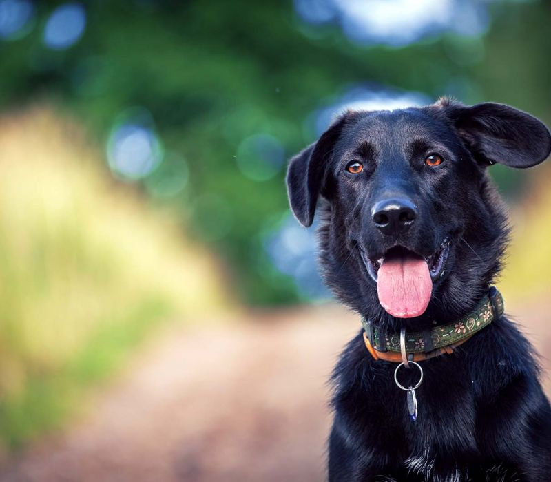 Trees That May Be Toxic to Your Pets