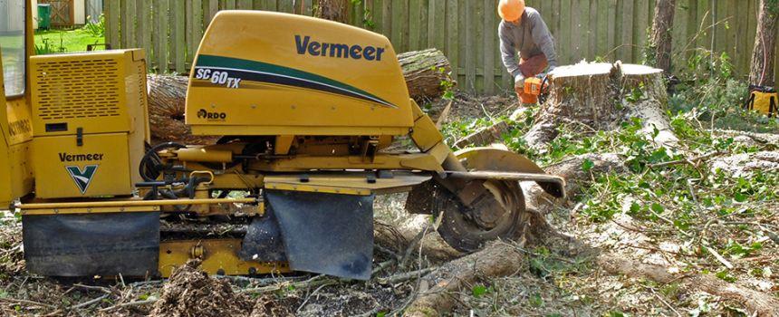 Hiring a Stump Grinder