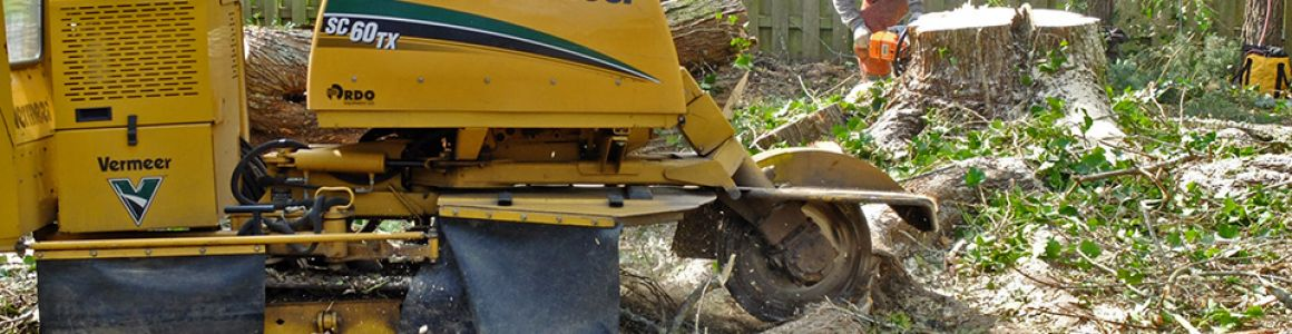 Hiring a Stump Grinder