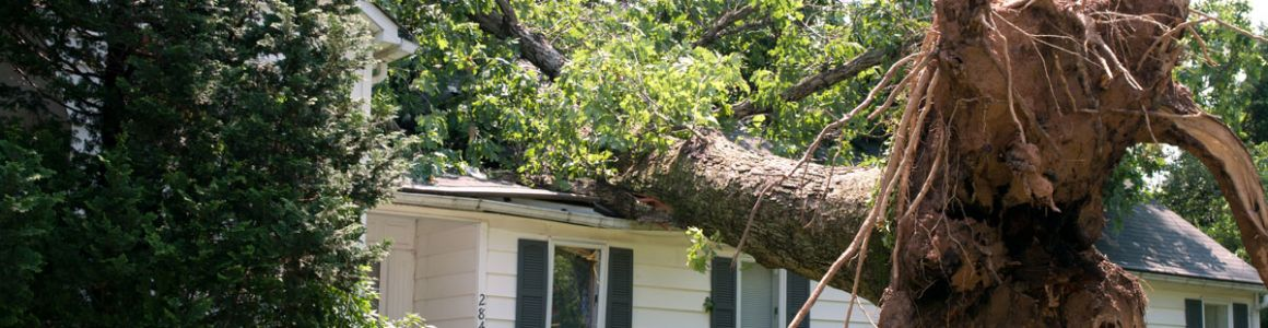 Does Insurance Pay to Remove a Fallen Tree?