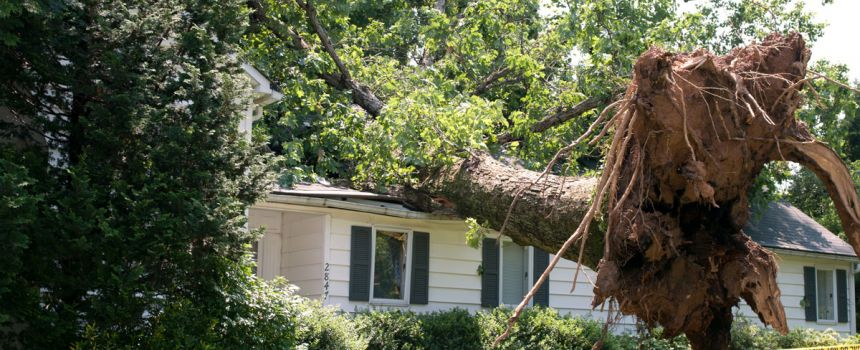Does homeowner insurance cover tree removal?