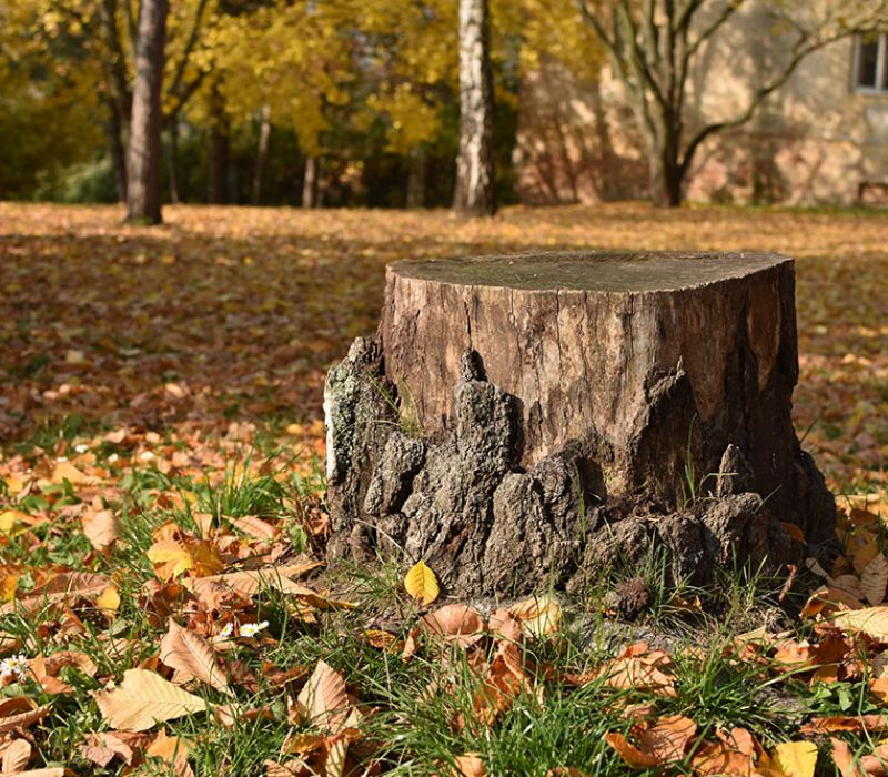 Should You Hire a Professional to Remove a Tree Stump?