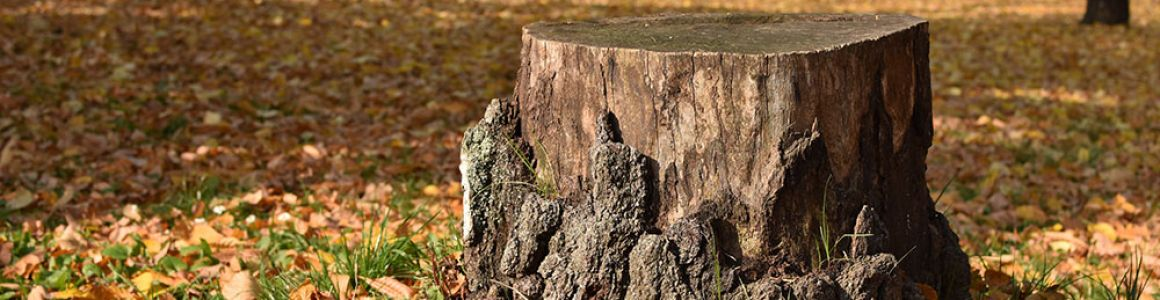 This is the best way to get rid of a tree stump