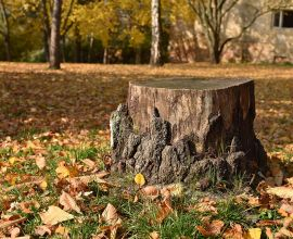 Washington Stump-Grinding Law – Requires Identifying Stumps
