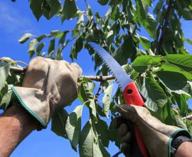 The Basics of Seasonal Tree Care