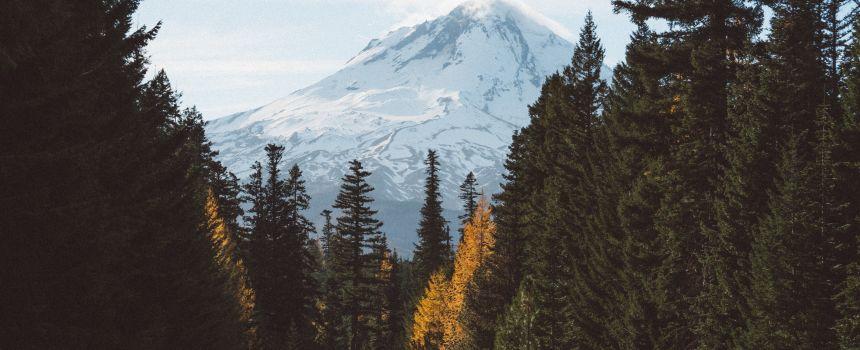 5 Heritage Trees of Portland