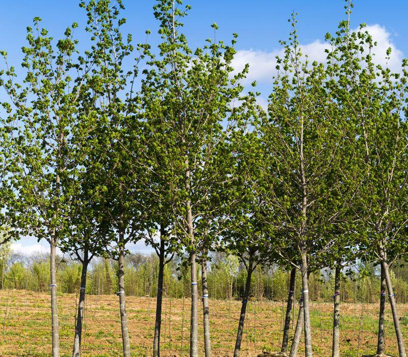 Where Should I Plant My New Tree?
