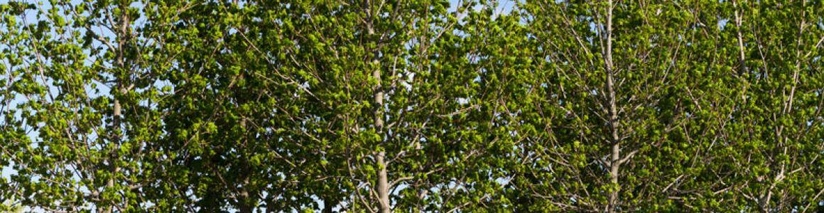 Where Should I Plant My New Tree Inexpensive Tree Care