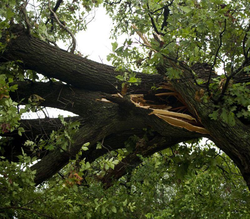Identifying Hazardous Trees