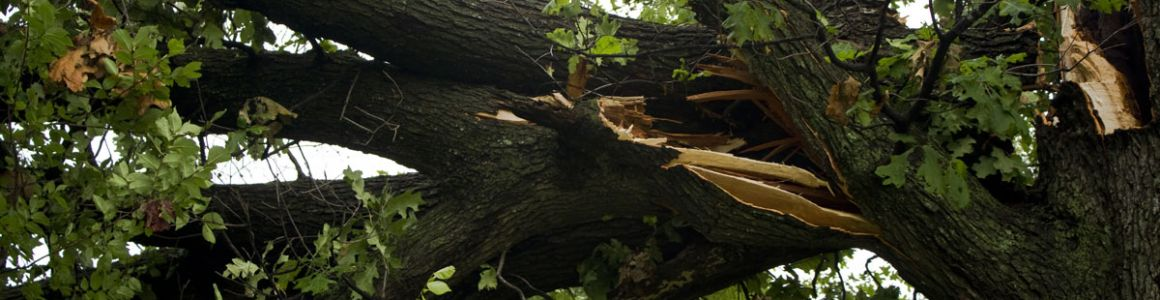 Identifying Hazardous Trees
