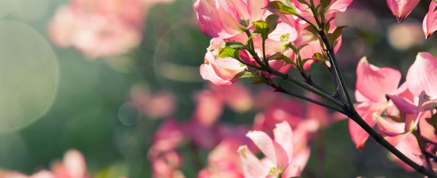 Spring Pruning Guide for Young Trees