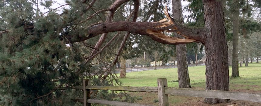 How to Deal with Storm Damaged Trees