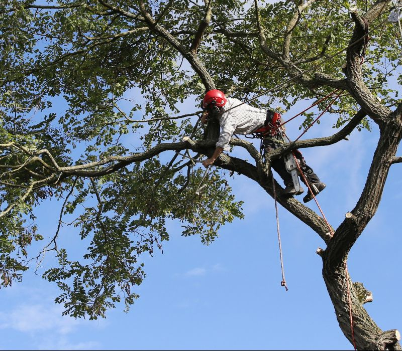 Is Your Oregon Tree Care Provider Properly Insured?