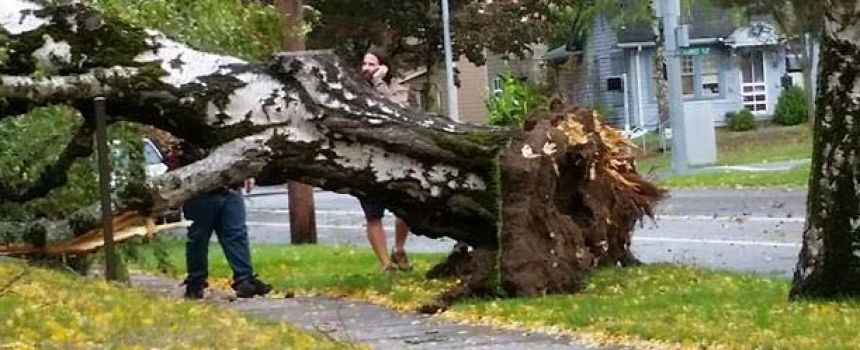 Wind Storm Knocks Down Trees Across The Valley: Cause & Effect