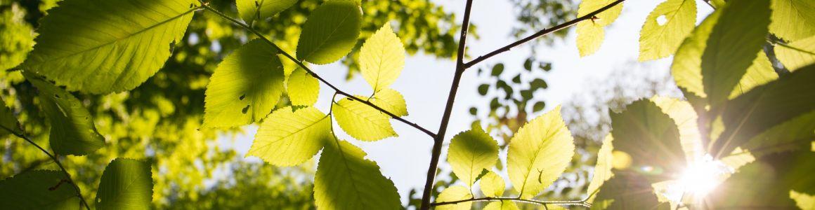 Tree Cost Removal Per Tree