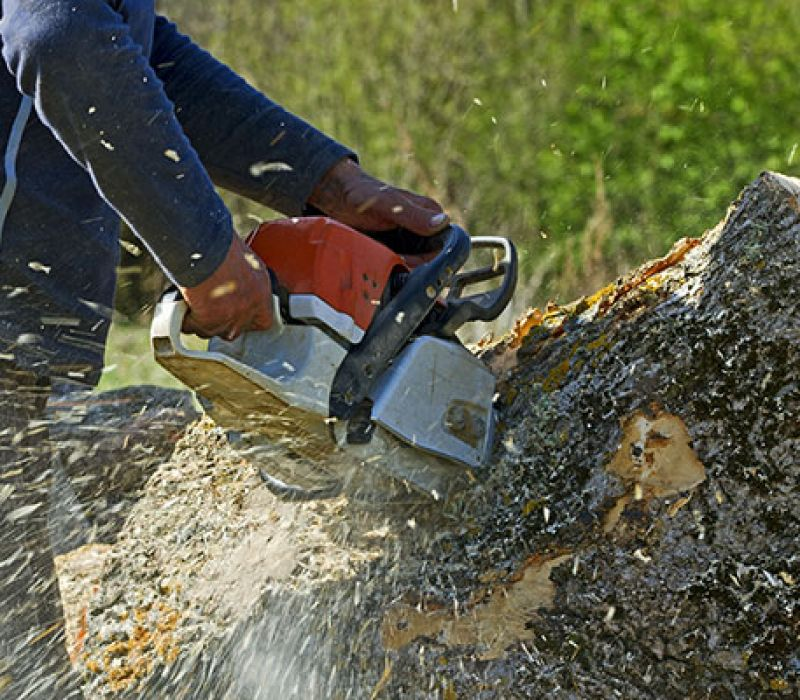Will Homeowners Insurance Cover Tree Removal? - Gunnison