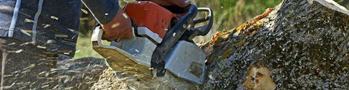 Do I need city of Portland permits for tree removal?